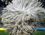 Hongrie : La taxe canine fait un flop