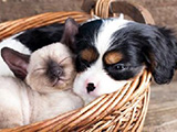 Identification : une obligation pour les chiens
