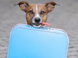 Comment importer un chien de l'étranger ?