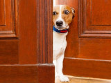 Déclaration Universelle des Droits de l'Animal