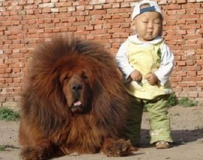 politique enfant unique chine