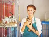 Vente de Chats et Chiens en Animalerie