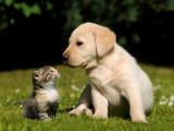 Nouvelle loi réglementant la vente des chiens et chats en France à partir du 1er janvier 2016