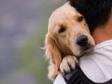 Comités Départementaux de Défense Animale