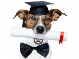Diplômes, Titres et Certificats