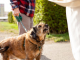 Votre chien et la légitime défense