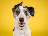 Observatoire National du Comportement Canin