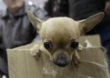 Suisse - Les ventes de chiots à la sauvette seront interdites