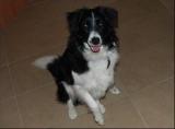 Suisse - abattre un chien dont le propriétaire n'a pas payé sa taxe annuelle.