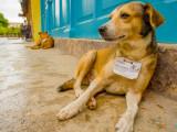 Identification des chiens en Suisse - Nouvelles prescriptions