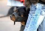 Les propriétaires de chiens dangereux devront obtenir un permis de détention