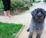 Crottes de chiens : des sachets gratuits et des amendes