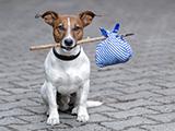 Les vaccins obligatoires pour votre chien à l'étranger et les races autorisés