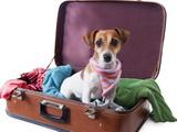 Voyager avec son chien en Europe : races interdites et réglementations spécifiques