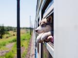 Voyager avec son chien dans l'Union Européenne