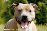 Les inscriptions de chiens de race enregistrent une hausse de 6 %
