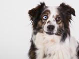 10 races de chiens au look incroyable