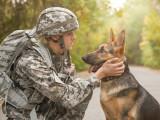 Les races de chiens les plus utiles