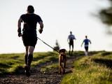 Les races de chiens les plus endurants