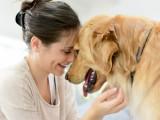 Les races de chiens les plus affectueuses