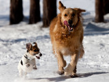 Chien sportif: 20 races de chiens sportives