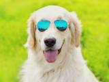 20 races de chiens qui supportent bien la chaleur