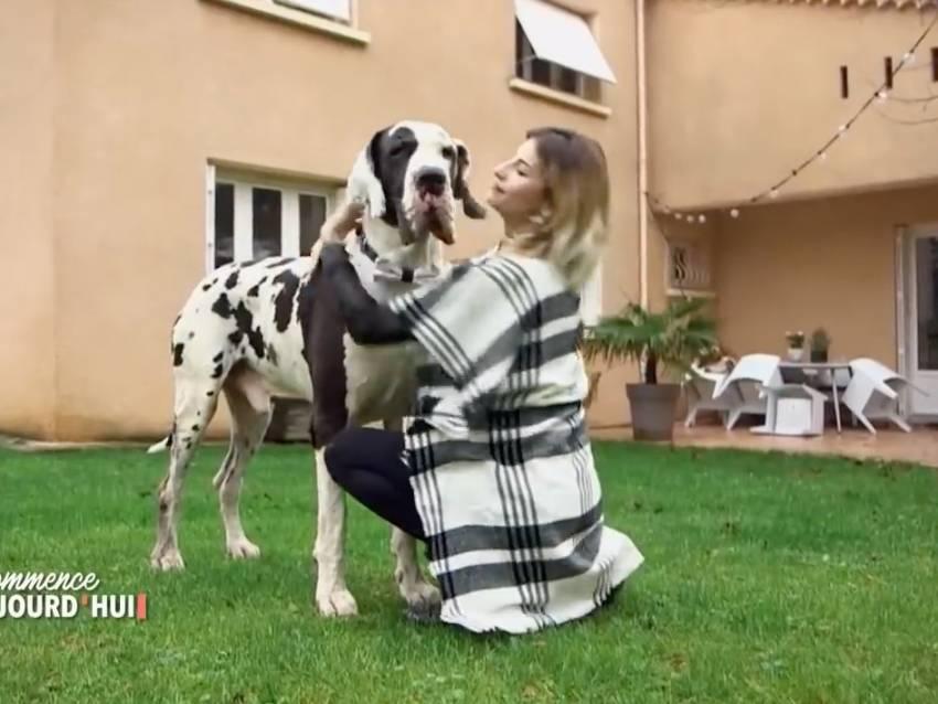 Reportage Sur Icare Le Dogue Allemand De 85 Kg Video