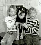 Border Collie, No. 1 au hit-parade canin