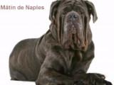 Compilation des chiens les plus populaires