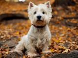 Nomenclature des races - Groupe 3 : Les Terriers