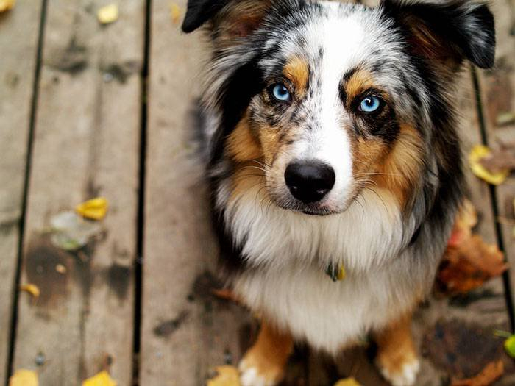L'origine des groupes de races de chiens