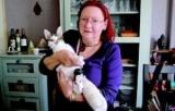 Robins des Chats : un vide-grenier pour stériliser les animaux en errance