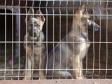 Suisse - SPA: refuges surchargés à cause des lois sur les chiens