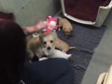 Une femelle retrouve ses chiots après avoir été abandonnée