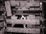 De plus en plus de chiens seraient victimes de maltraitance
