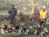 Exposition nationale d'élevage de bassets artésiens normands et de chiens d'Artois