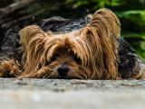 Dany Saval et Brigitte Bardot portent plainte contre un trafic de chiens