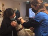 Ioko, une association en faveur des chiens de sans-abri