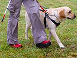 Semaine du chien guide d'aveugle