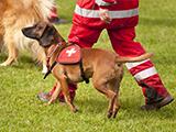 Stage de chiens de recherche et de sauvetage