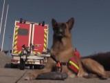 Reportage sur les chiens sapeurs-pompiers
