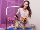 Comment devenir toiletteur canin : qualités, écoles et formations