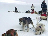 Comment devenir musher : qualités requises et formations disponibles