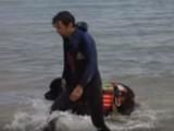 Sauvetage en mer avec des Terre Neuve
