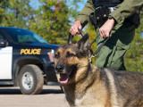 Devenir maître chien : qualités requises et formations