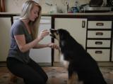 Comment devenir éducateur canin ?