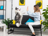 Devenir pet-sitter : conditions, qualités requises, formalités...