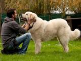 Le comportementaliste canin : un médiateur entre le chien et son humain
