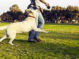 Devenir éducateur pour chiens : Portrait de Franck Philip, éducateur canin