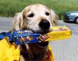 SUISSE -  L'association Le Copain forme des chiens d'assistance.